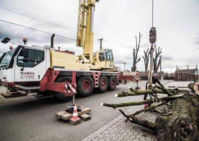 orezstromu.cz - Rizikové kácení 11