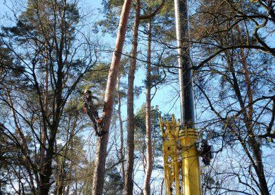 orezstromu.cz - Kácení stromu ZOO Lešná - 06