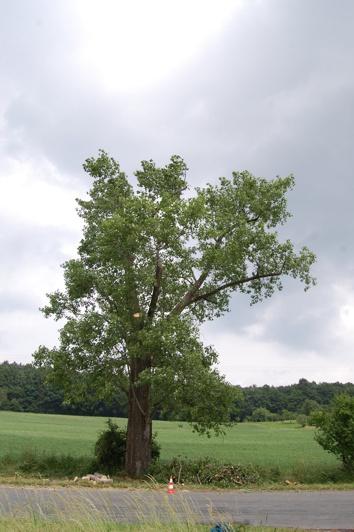 orezstromu.cz - Po ošetření stromu: Bezpečnostní řez