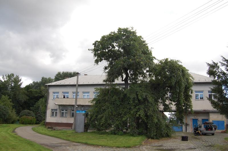 orezstromu.cz - Před ošetřením stromu 01