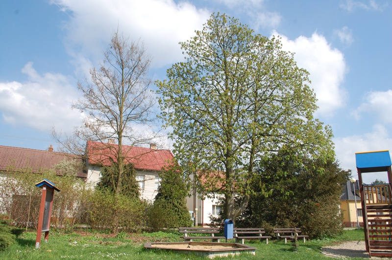 orezstromu.cz - Před ošetřením stromu 02