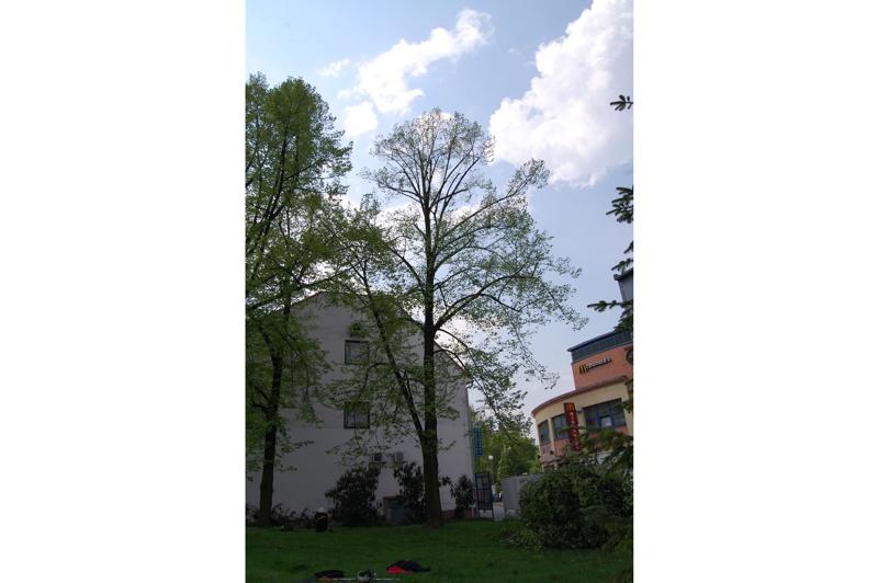 orezstromu.cz - Po ošetření stromu: Zdravotní řez
