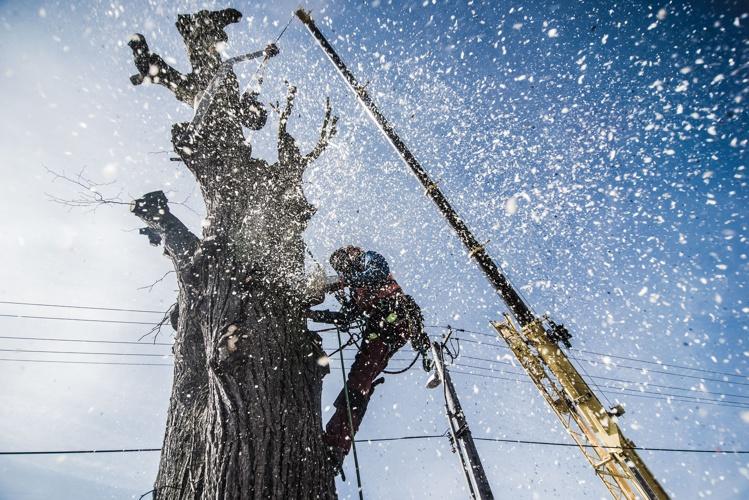 orezstromu.cz - Rizikové kácení stromů