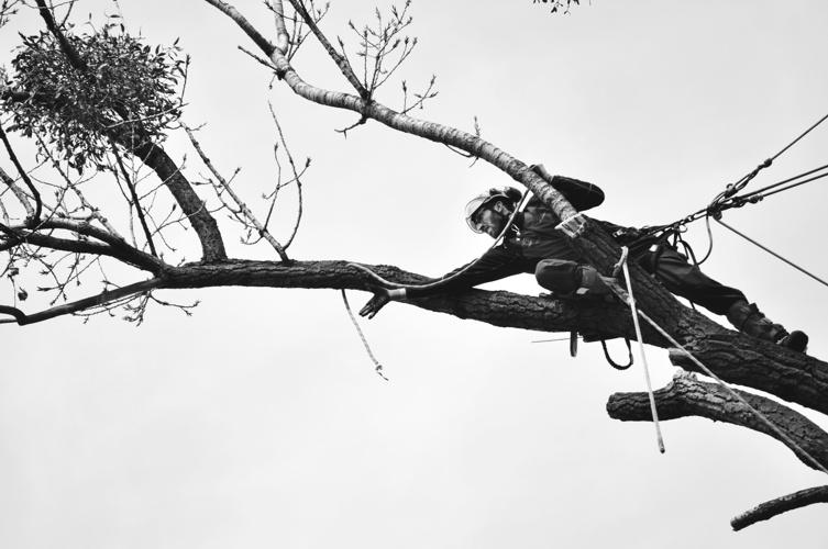 orezstromu.cz - Ošetření stromu řezem