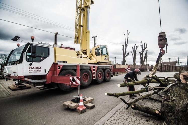 orezstromu.cz - Zajištění odvozu dřevní hmoty