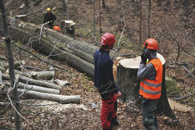 orezstromu.cz - Kácení a zpracování dřevní hmoty