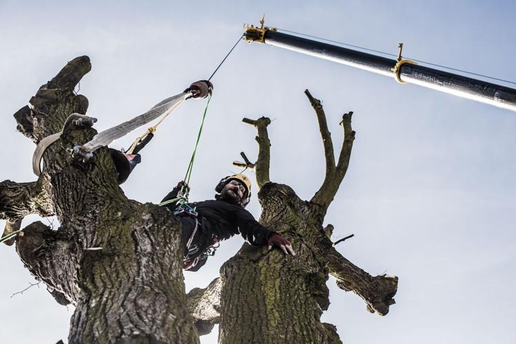 orezstromu.cz - Rizikové kácení stromu