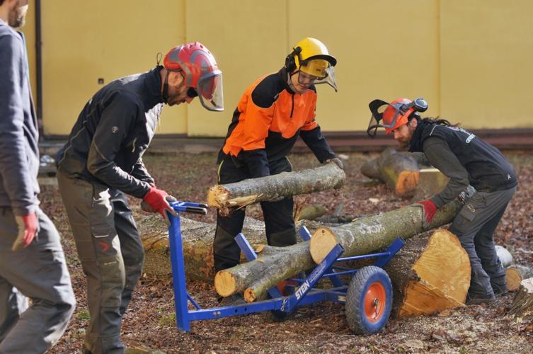 orezstromu.cz - Práce s dřevní hmotou po rizikovém kácení
