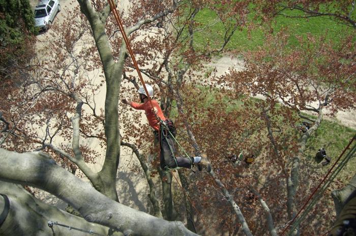 orezstromu.cz - Reference Holešov - Ošetření stromů, bezpečnostní vazby