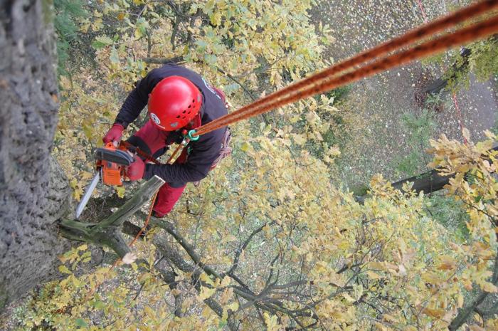 orezstromu.cz - Reference Otrokovice - Ošetření stromů řezem