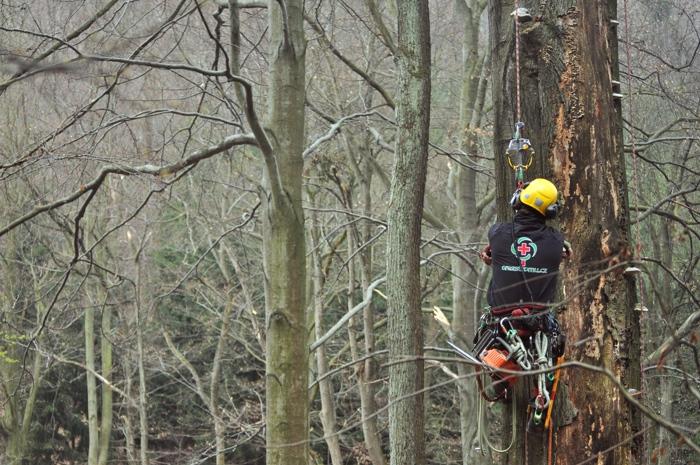 orezstromu.cz - Reference Zlín - Posouzení stavu stromu