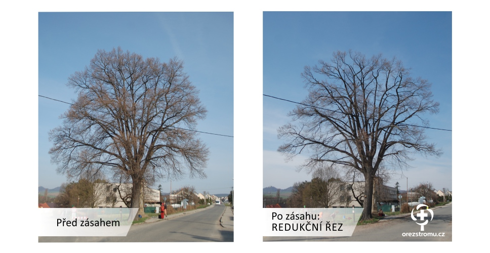 orezstromu.cz - Redukční řez před/po zásahu