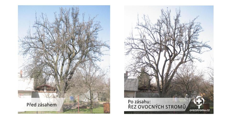 orezstromu.cz - Řez ovocného stromu před/po zásahu