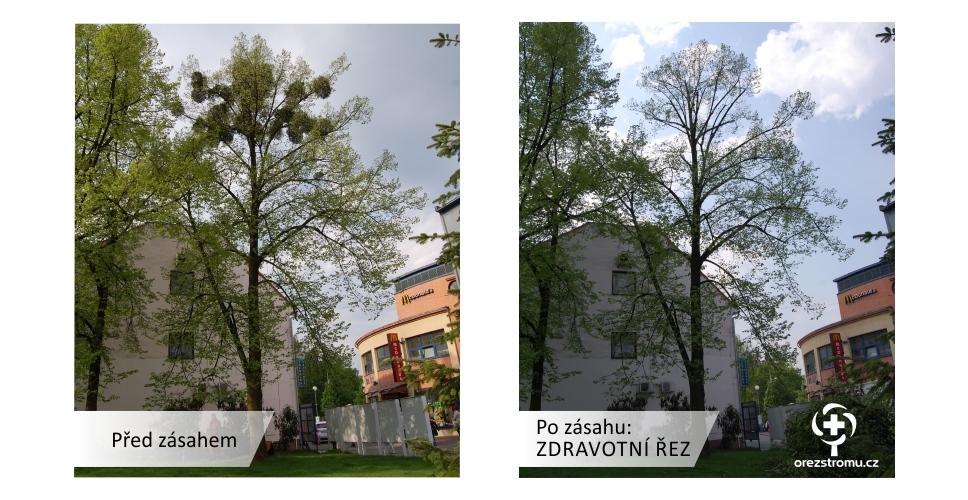 orezstromu.cz - Zdravotní řez před/po zásahu